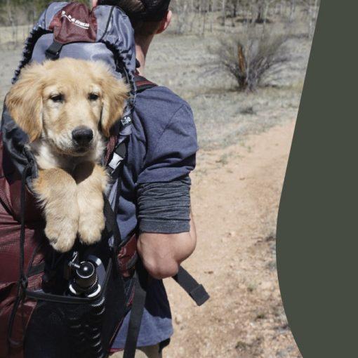 5 razones para que nuestro alojamiento rural sea pet-friendly